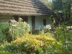 bogata roślinność w ogrodzie1